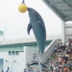 仙台うみの杜水族館へオープン最初の土曜に行ってきたレポート