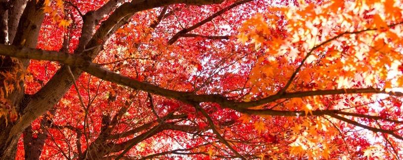 秋はデートに最高